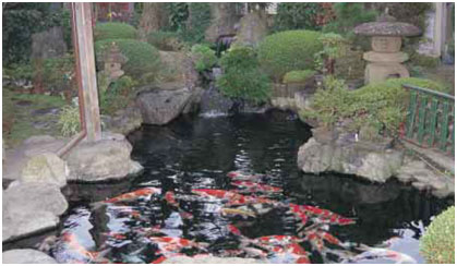 Koi and Japanese Culture