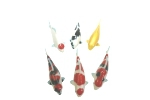 Gorgeous Nishikigoi ornament 8.5cm 6pcs. Set
