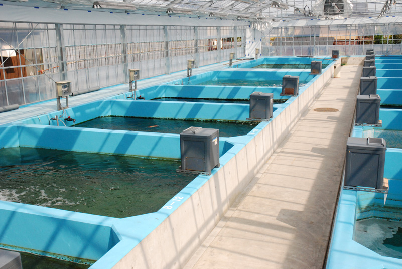 Related keywords suggestions for koi farms in japan for Koi farm japan